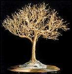 Sal Villano Wire Tree Sculpture - Golden Elm - Wire Tree Sculpture