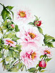 Marie-Claire Houmeau - Peonies China