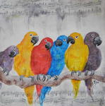 Veronique Orsi - Colorful parrots