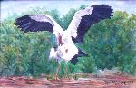 Ruth Miriam Da Natureza - Storks itself loving