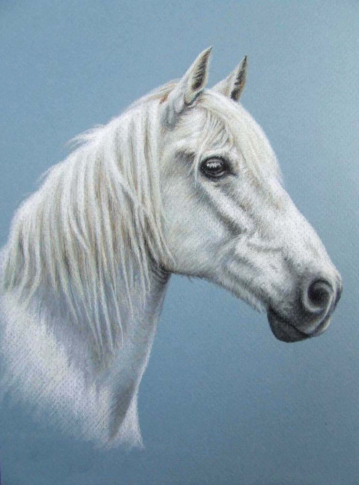 Artwork >> Arts And Dogs >> White Stallion