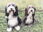 Arts And Dogs - Bearded Collies