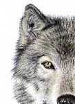 Arts And Dogs - Wolf Eye