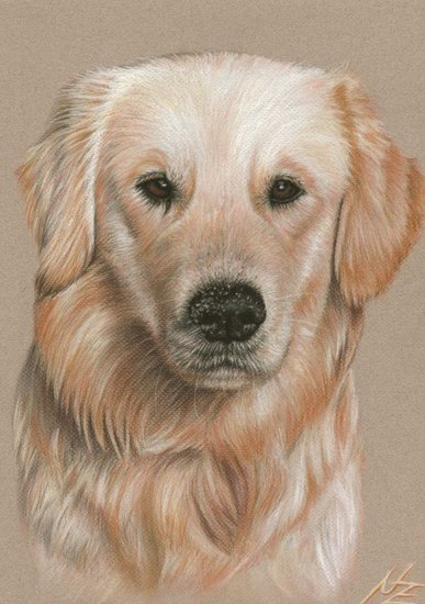 Artwork >> Arts And Dogs >> Golden Retriever - Sandy Nose