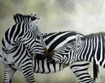 Chantal Rousselet - Kiss zebra