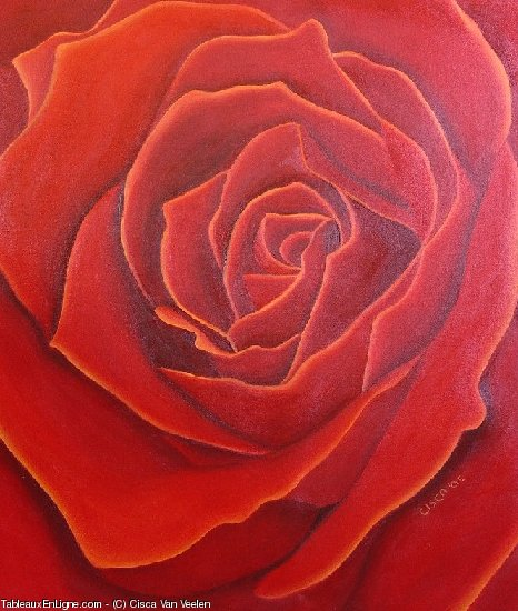 Artwork >> Cisca Van Veelen >> Orange/red rose 60 x 50cm