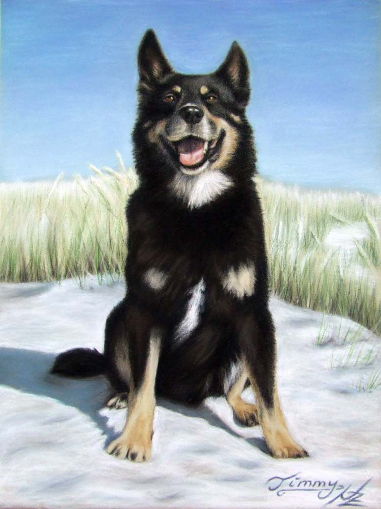 Artwork >> Arts And Dogs >> Sheperd Dog Timmy