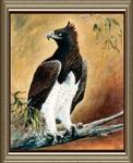 Rita Palm - Martial Eagle