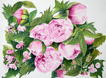 Marie-Claire Houmeau - The Peonies