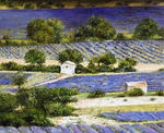 Marie-Claire Houmeau - fields of lavander