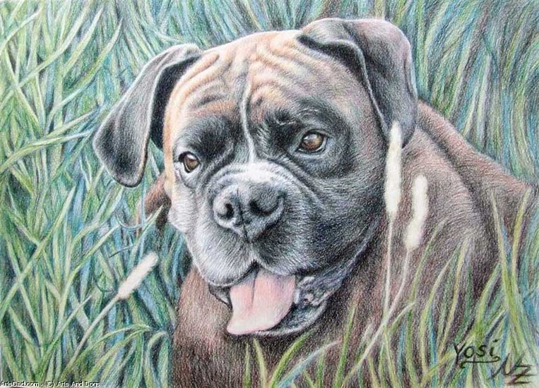 Artwork >> Arts And Dogs >> Boxer Yosi