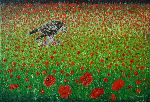 Christian Bonnefoy - Common Buzzard place in  out a  filds  from  poppies