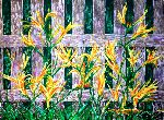 Victor Ovsyannikov - daylily in the garden