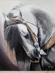 Exposition Lakhdarart - Maroc - the beauty of the horse grey