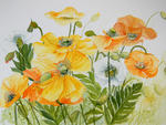 Marie-Claire Houmeau - Colorful poppies
