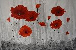 Didier Desvignes - Poppies in