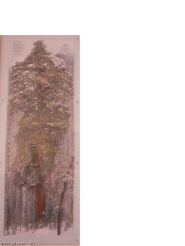 Artwork >> Валерий Пастель >> SEQUOIA - 3200 years