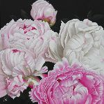 Chantal Rousselet - Peonies