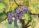 Radmila Cojanovic - grape