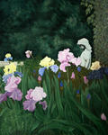 Angela Coleman - Irises II: Irises on View