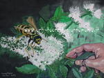 Anna Maria Crestoni - Anna Maria Crestoni - Bee Bumblebee hand with flowers and mint. - Oil on Canvas - 80 x 60 Technique Brush - year 2013