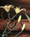 Branislav Puletic - LILIES FROM USA ( Sold )