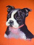 Piffeteau Marie-Laure - puppy at  choose