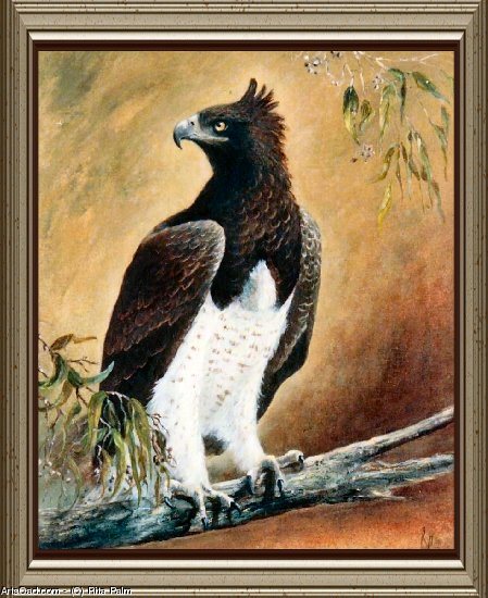 Artwork >> Rita Palm >> Martial Eagle