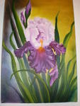 Mucchielli Martine - the Irises