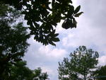 Melissa Martin - South Carolina view of  the sky, clouds and trees