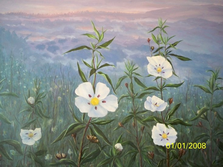 Artwork >> Juan Jose Lozano Merino >> rock rose flower Extremadura saws