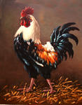 Dusan Vukovic - rooster - the master of the yard