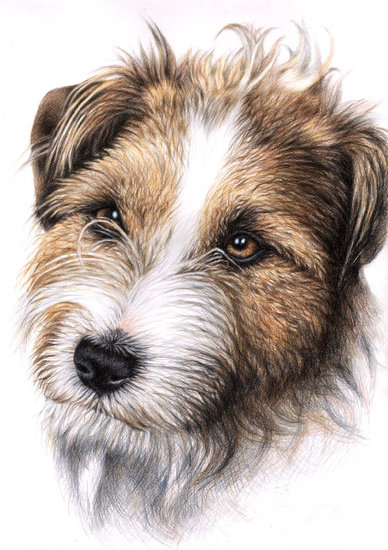 Artwork >> Arts And Dogs >> Jack Russell Portrait