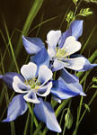 Marie-Claire Houmeau - The columbine