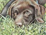 Arts And Dogs - Labrador Puppy