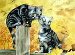 Phil Hilton - Kitty Gossip