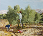 Jean-Claude Selles Brotons - The olivades at the  orchard  gabi in aureille  Provence
