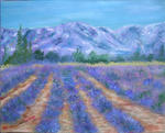 Eliane Vieil - Lavenders of the  Luberon