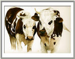 Marie-Claire Houmeau - The cows on
