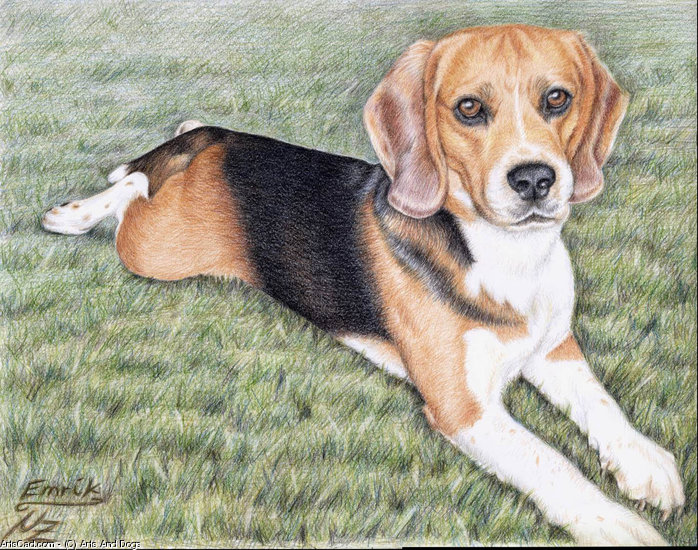 Artwork >> Arts And Dogs >> Beagle Emrik