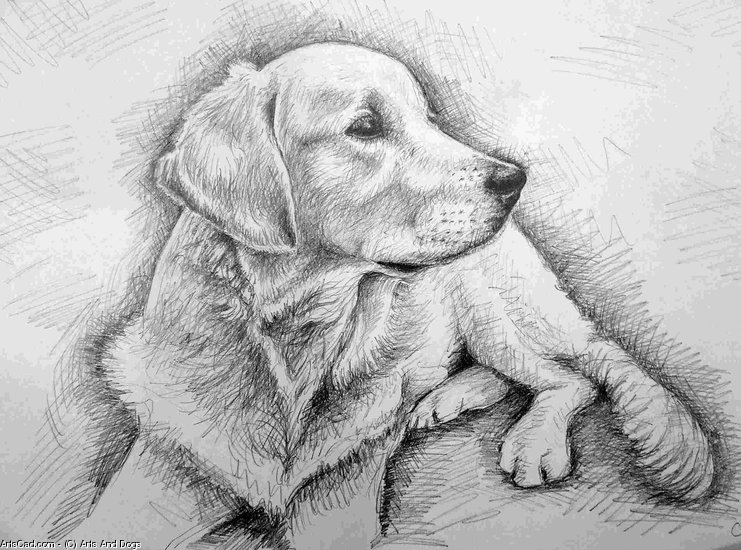 Artwork >> Arts And Dogs >> Golden Retriever Graphite