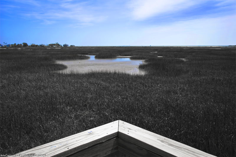 Artwork >> Marilyn Davenport >> Marsh From The Deck
