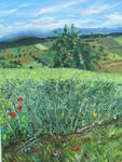 Mazouz Patrice - Fields of Oilseed rape in grain , with view them on vosges ( vandoncourt )
