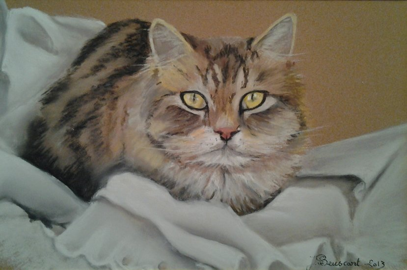Artwork >> Joelle Beuscart >> Cat with yellow eyes