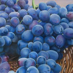 Cauchois Danielle - grapes black